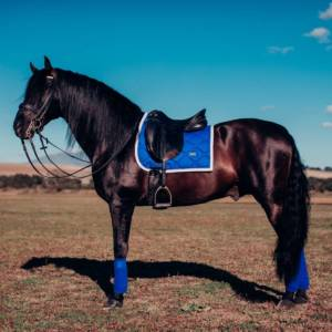 Equestrian Stockholm Sapphire Saddle Pad and Bandages