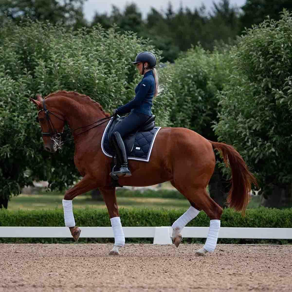 Midnight Blue White Edge Saddle Pad Vi Equestrian